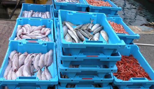 Foto: Arxiu Blanesaldia.com