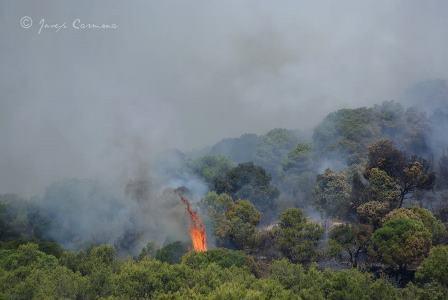 Imagen del incendio / Foto: Josep Carmona
