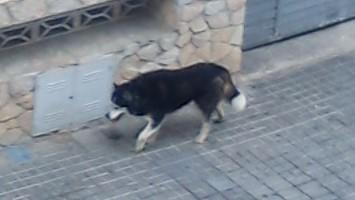 Un perro abandona, en una calle de Blanes