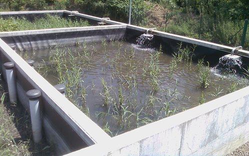 Detall d'un dels llits de rizocompost (tractament natural per deshidratar fangs) de la depuradora d'Osor