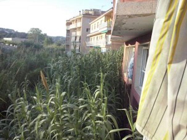 Imatge de les plantacions que creixen a la riera